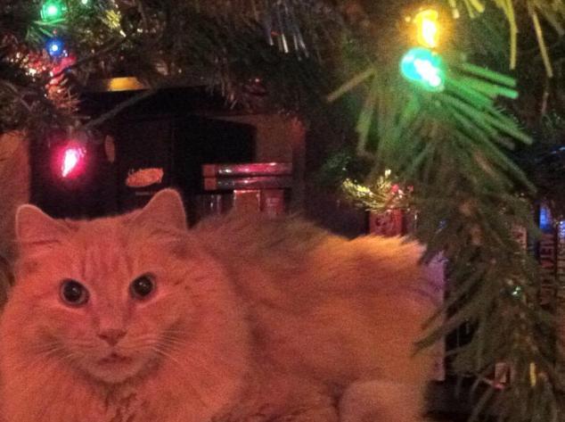 stanley under tree